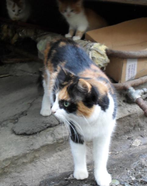 Кошки-подкидыши (482x610, 619Kb)