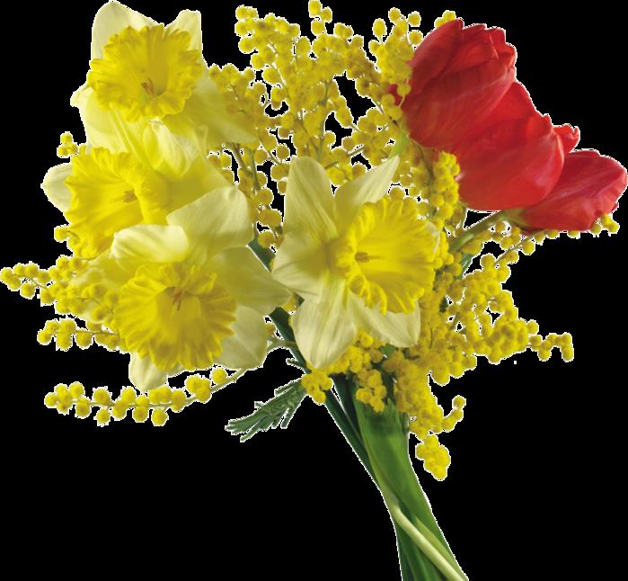 Картинки цветов мимоза 4
