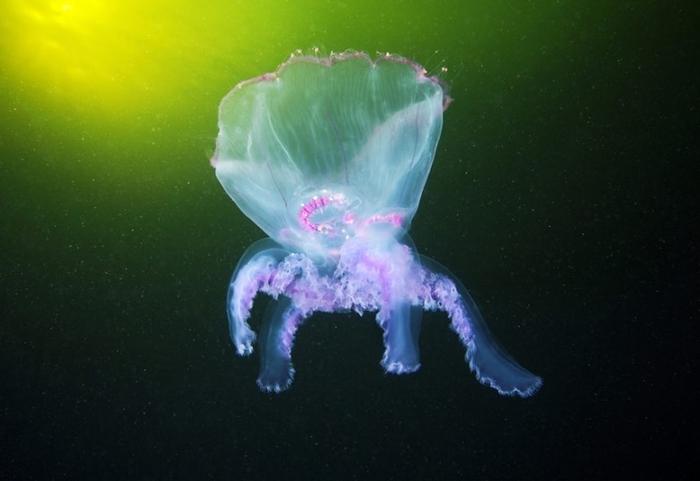 Подводная фотография Александра Семенова