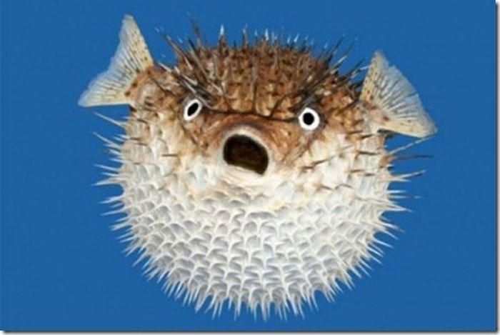 рыба знакомства с парнем icq