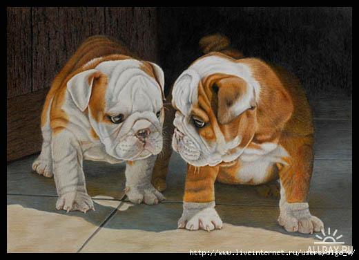 4964063_1269593410_puppylovebborder (520x376, 90Kb)