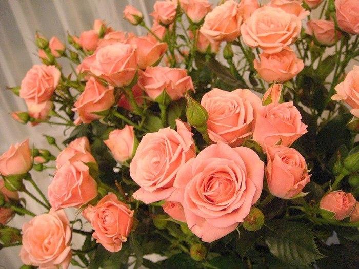 rozi (700x525, 99Kb)