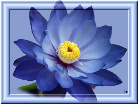 Синяя-лилия (450x339, 165Kb)