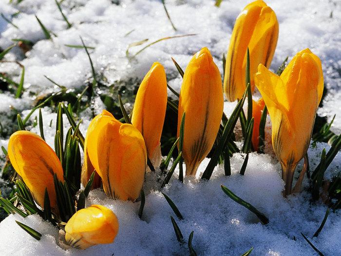 Меняю зиму на весну...