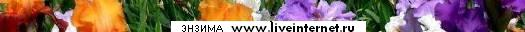4387736_1_1 (525x32, 5Kb)/4387736_1_1 (525x32, 5Kb)