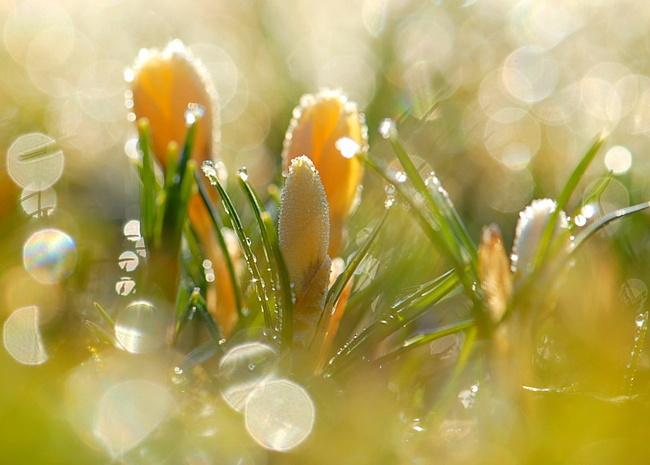 Музыкально-поэтическая гостиная 'Услышать музыку Весны…'
