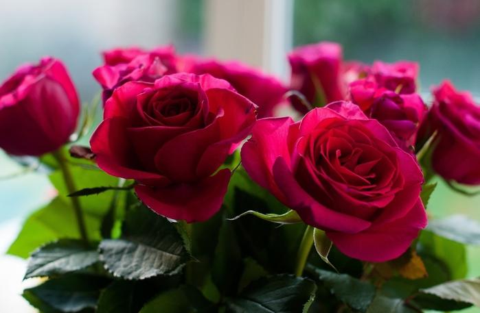 цветы (700x457, 197Kb)