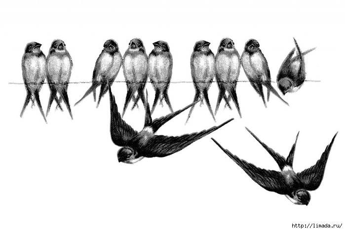 Vintage-Bird-Image-Swallows-Line-GraphicsFairy2-1024x686 (700x468, 118Kb)