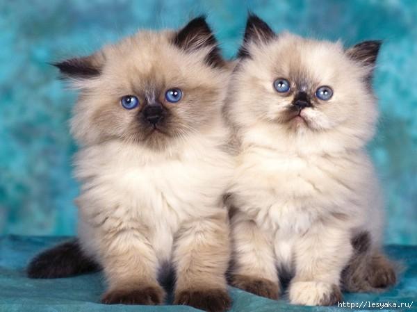 3925073_Cats0106 (600x449, 126Kb)