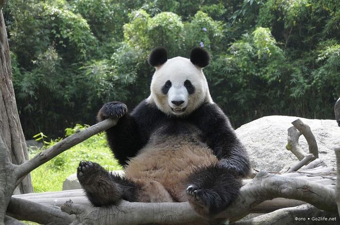 Панда (700x465, 136Kb)