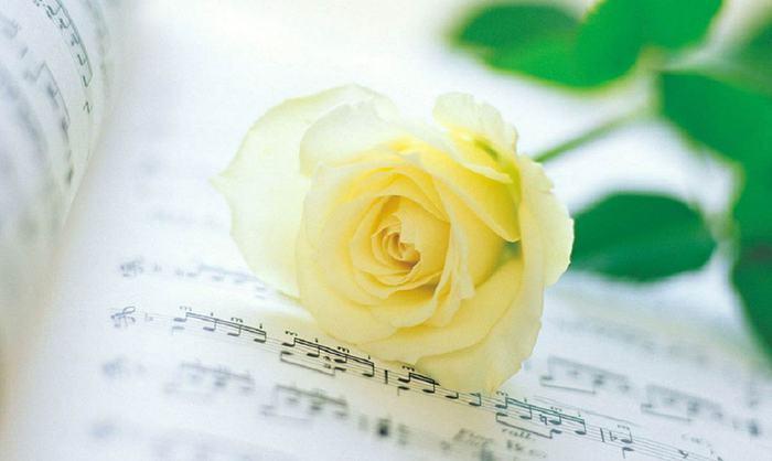 "Схема ""Желтая роза и ноты"""