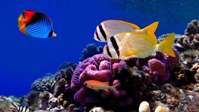 фото морские цветы: