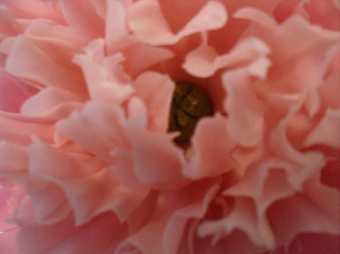 Розовые пионы_3 (700x524, 463Kb)