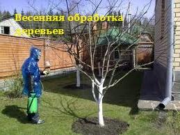 весенняя-обработка-деревьев (259x194, 32Kb)