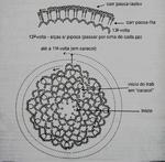 Превью 2 (597x586, 211Kb)