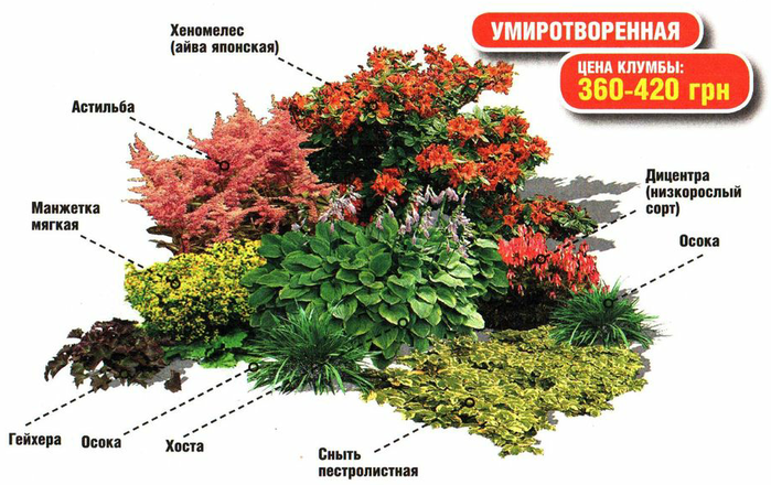 Тенелюбивые многолетние цветы для сада