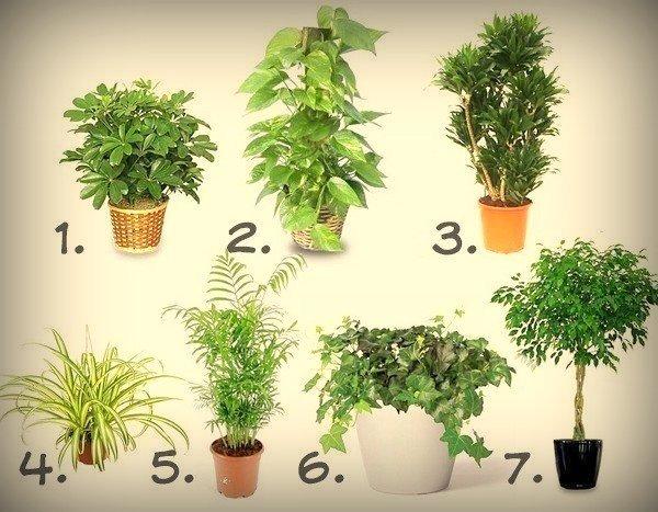 полезные комнатные растения/1394975370_poleznuye_komnatnuye_rasteniya (600x467, 73Kb)
