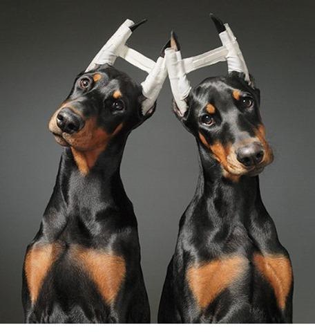 собаки тима флетча 4