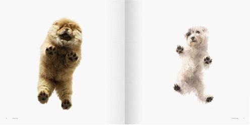 собаки тима флетча 12