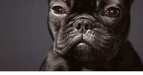 собаки тима флетча 13
