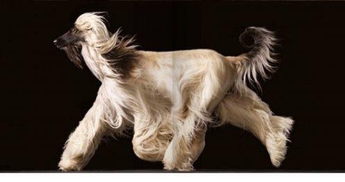 собаки тима флетча 17