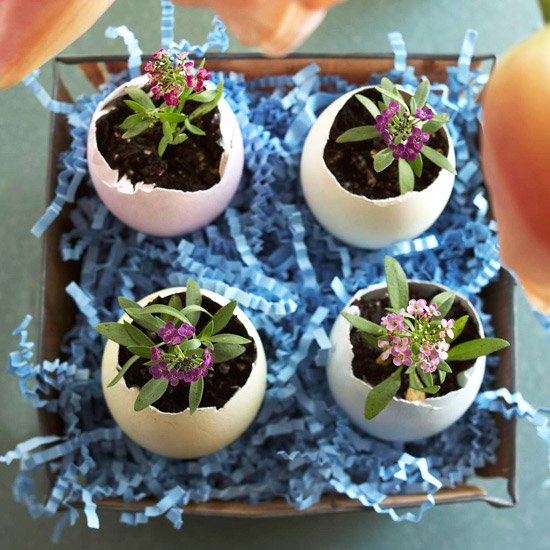 flowers-in-egg-shell-ideas10 (550x550, 284Kb)