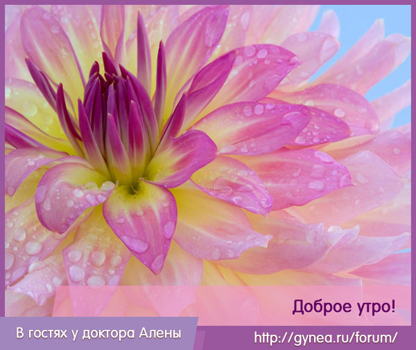 Gineya_site (600x506, 99Kb)