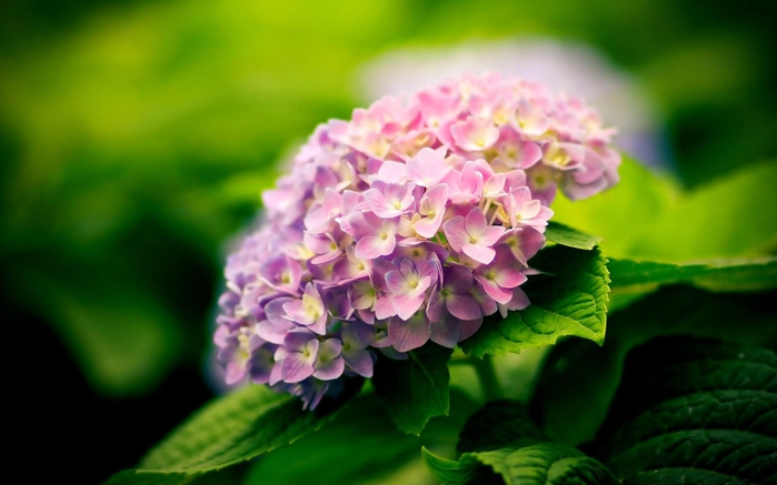 hq-wallpapers_ru_flowers_62117_1920x1200 (700x437, 164Kb)