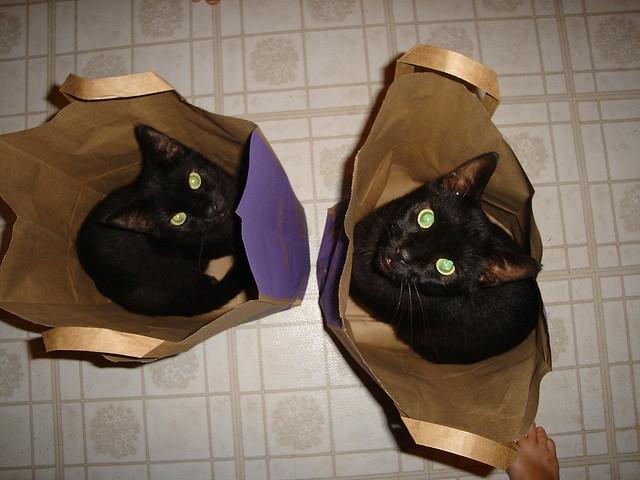 Коты и кошки в пакетах1 (640x480, 190Kb)