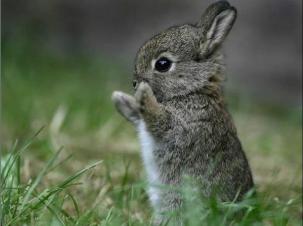 кролик 8 (600x449, 155Kb)