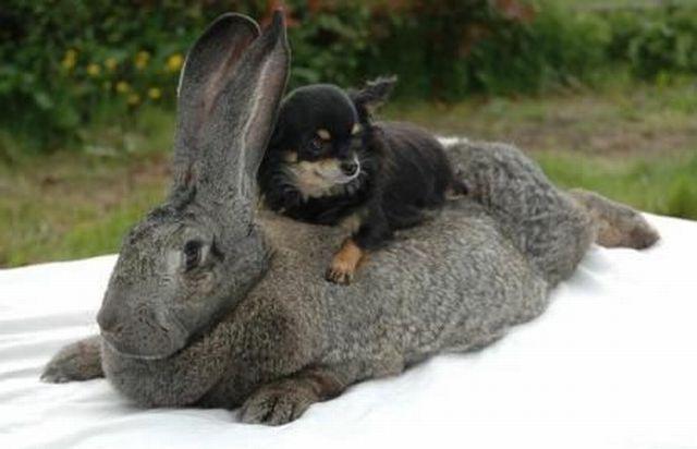 кролик 10 (640x412, 135Kb)