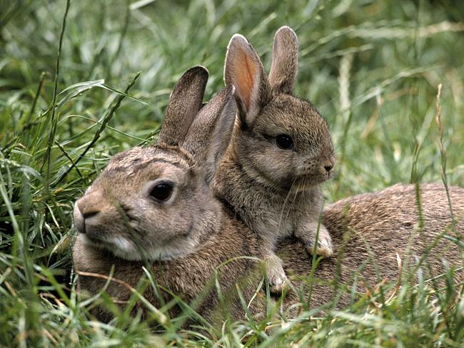 кролик 13 (650x488, 377Kb)
