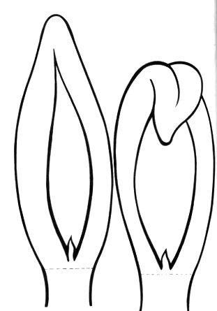 Для детского утренника. Рожица и ушки пасхального зайца (6) (311x445, 45Kb)