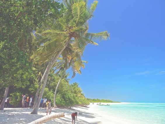7 Пальма на белоснежном побережье вблизи города Дидду alsay 3978191505_b7d7b870e5_z (565x424, 22Kb)