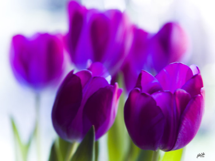 фиолетовый цвет 9 (700x525, 191Kb)