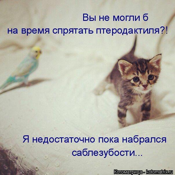 kotomatritsa_E (604x604, 135Kb)