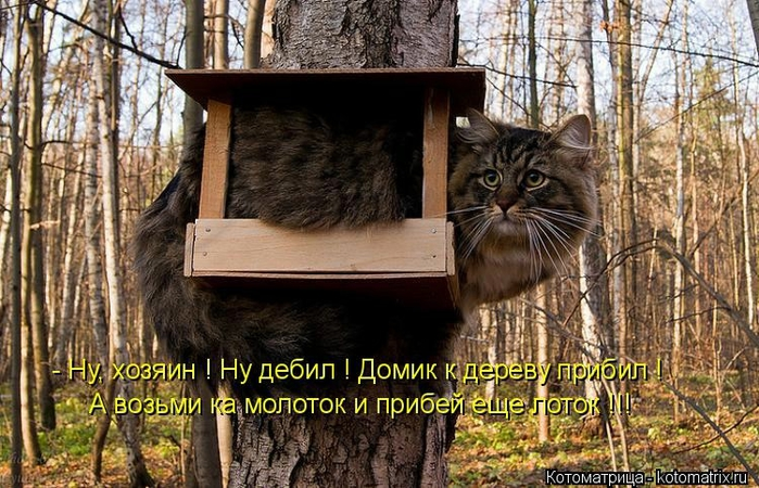kotomatritsa_K (700x450, 307Kb)