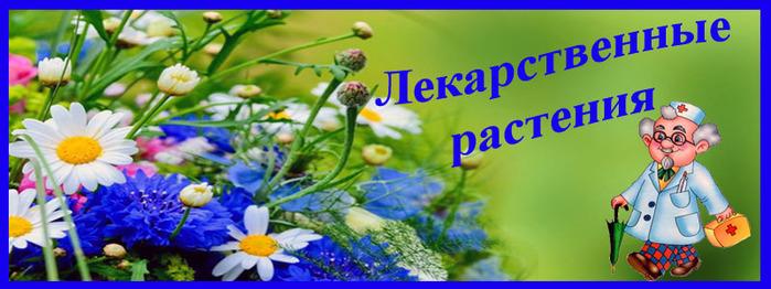 Лекарстенные растения (700x262, 93Kb)