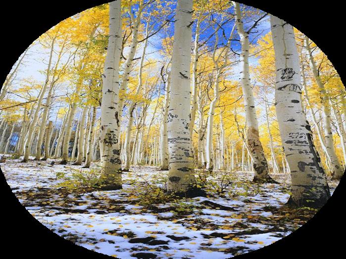 1293203634_image_222 (700x524, 838Kb)