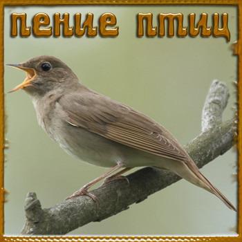 Пение птицы (448x336, 34Kb)