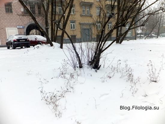 Много белого снега. Мартовский снег. /3241858_1903_16 (550x413, 121Kb)