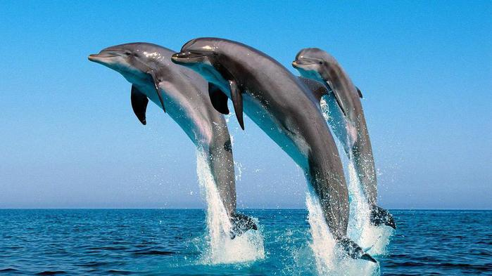 ocean_life_wallpapers_106-1600x900 (700x393, 44Kb)