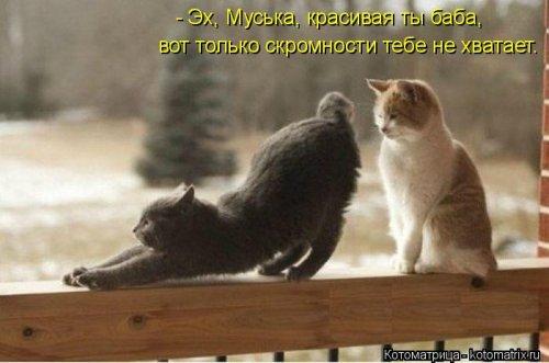 1395429924_kotomatricy-13 (500x331, 123Kb)