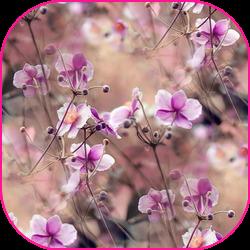 oie_jpg (3) (250x250, 178Kb)