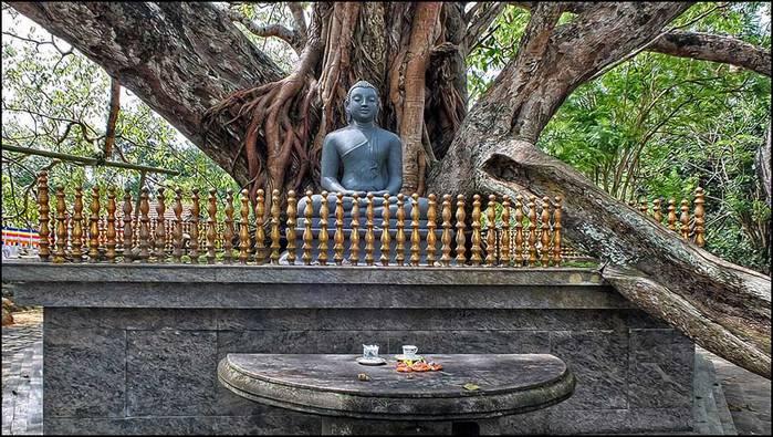 Священное дерево Бо в Ятагале