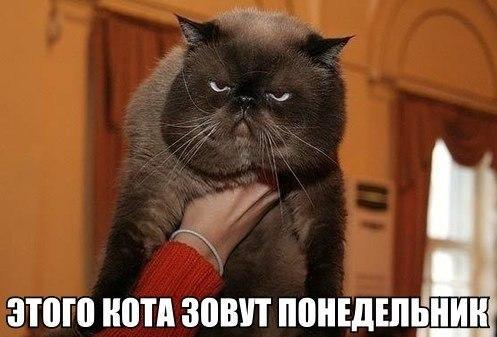 smeshnie_kartinki_139545862489 (497x337, 139Kb)