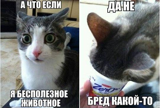 smeshnie_kartinki_139481564017 (541x367, 176Kb)
