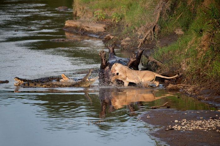 дикие животные фото 1 (700x465, 417Kb)