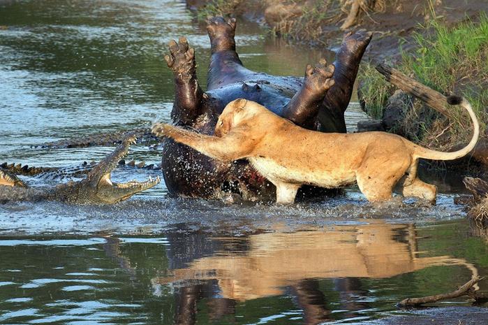 дикие животные фото 3 (700x465, 464Kb)