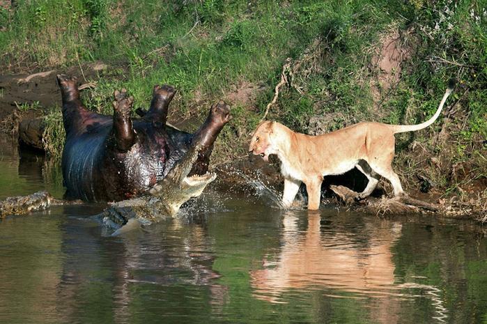 дикие животные фото 5 (700x465, 462Kb)